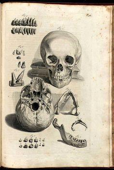 Anatomy Illustrations 1600s   Flickr - Photo Sharing!