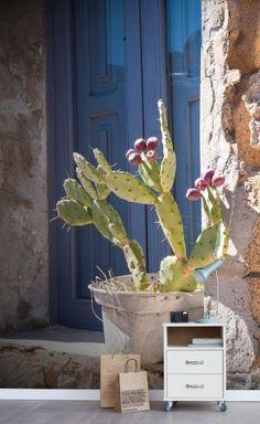 AR Florale Fototapete Sonniger Kaktus – Bild 2