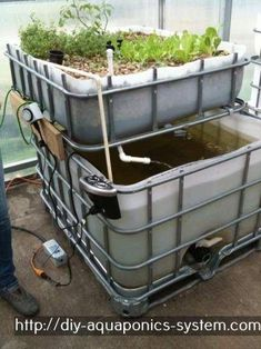Aquaponics fish tank design akuaponik pdf,aquaculture tanks for sale aquaponics aeroponics,aquaponics system design pdf backyard farming australia. Aquaponics System, Hydroponic Farming, Aquaponics Greenhouse, Backyard Aquaponics, Hydroponic Growing, Growing Plants, Aquaponics Plants, Aquaponique Diy, Diy Spa