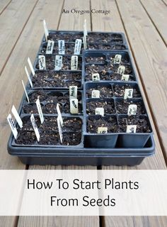 Easy seed starting tutorial, including tips on where to grow your seedlings, even if you think you don't have the space!