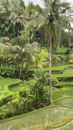 Calm and beautiful ricefields in Ubud. Beautiful Nature Scenes, Beautiful Photos Of Nature, Beautiful Places To Travel, Amazing Nature, Beautiful Landscape Wallpaper, Beautiful Landscapes, Travel Pictures Poses, Nature Gif, Nature Illustration