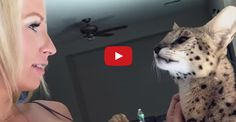 Watch This Cat Say Mom !!
