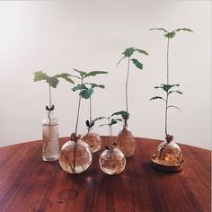 The rustic wedding event trend is always going successful, and so every day I recognize a little more unique projects and inspiration floating around the world. Indoor Garden, Garden Plants, Indoor Plants, Water Plants, Water Garden, Diy Plante, Plant In Glass, Yucca, Decoration Plante