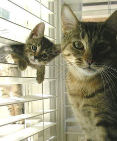 HELLO! Happy #Caturday! We hope you are having fun with your little #PreciousPawPrints