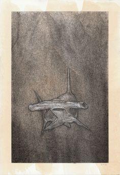 Hammerhead Shark - Artist Winkstink #drawing #charcoal #pencil #watercolor #ColoredPencil #art #floating