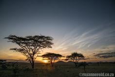 Visit ol Donyo Lodge in Kenya for a luxury safari on Maasai land in the Chyulu Hills. Nairobi, East Africa, Lodges, Beautiful Beaches, Kenya, Safari, Wildlife, Explore, Sunset