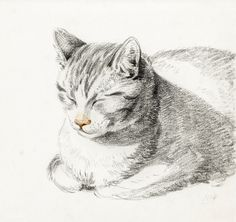 Sketch of a cat (1808) by Jean Bernard (1775-1883). Original from the Rijks Museum. Digitally enhanced by rawpixel. | free image by rawpixel.com Video Chat, Cat Sketch, Photo Chat, Framed Canvas Prints, Cat Drawing, Art Google, Cat Art, Animal Drawings, Art Reproductions