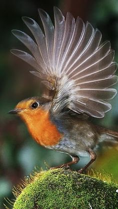 """Some-kinda Little Bird (whatcha macallit) ~ Miks' Pics """"Fowl Feathered Friends V"""" board @ http://www.pinterest.com/msmgish/fowl-feathered-friends-v/"""
