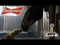"Budweiser Puppy Commercial - Budweiser super bowl commercial 2014 ""Puppy love"""