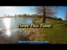 Three This Time! - Stocker Trout Fishing Stocker Trout Fishing