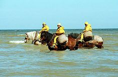Oostduinkerke on the West Flanders coast, Belgium is the only place in the world where you can still see the 500 year old tradition of fisherman trawling for shrimp on horseback. Pin'd from android: http://pind.feigdev.com
