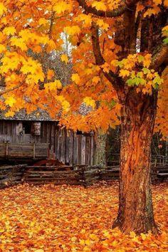 Bucks County, PA cabin in Fall...perfect