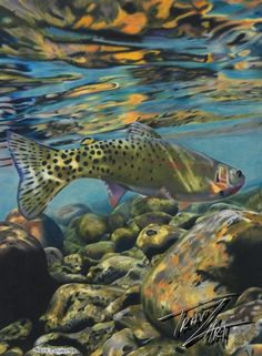"""Freestone"" Colored pencil drawing of a Cutthroat Trout by Travis J.Sylvester."