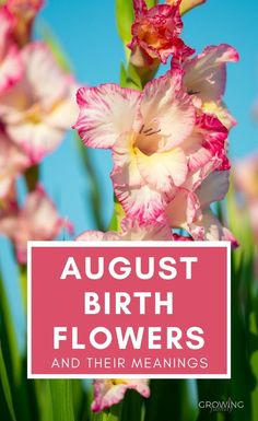 If your birthday is in August, or if you'd like to buy a personalised gift for a loved one with an August birthday, check out the August birth flowers and their symbolism. #flowers #birthflowers #growingfamily