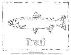 Steelhead Trout Coloring Page,Trout Pictures & Outlines for Fish Coloring Pages Steelhead Trout Outline Pictures