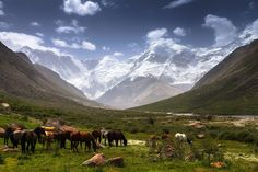 An alpine pasture in Bayankol valley in the Almaty region, Kazakhstan
