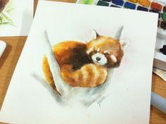 red panda in water color