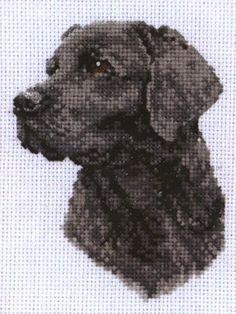 Black Labrador Cross Stitch Kit | sewandso
