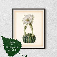 Wall art prints Vintage botanical print от RestoredBotanicalArt