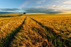 Countryside by Piotr Krol (Bax)