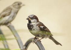 Free Bird by Greg Thiemeyer Photography