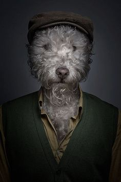 Underdog is a collection of whimsical portraits of dog dressing up like human, created by artist Sebastian Magnani. Foto Fun, No Bad Days, Animal Heads, Dog Costumes, Animal Fashion, Dog Dresses, Dog Portraits, Pet Clothes, Dog Clothing
