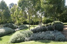 native-garden-with-lawn. Great backbone plants, would be stunning with more colour