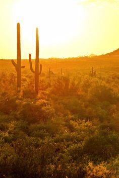 The FireSky makes a great base for exploring Scottsdale and the surrounding desert areas. FireSky Resort & Spa (Scottsdale, Arizona) - Jetsetter
