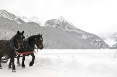 an Architect Abroad / Romance in the Rockies: 10 Things to Do in Banff Banff Hotels, Banff Canada, Romantic Things To Do, Perfect Place, Romance, Horses, Mountains, Places, Travel
