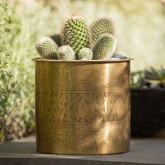 10 Plant Pots Ideas Planters Potted Plants Tool Sheds