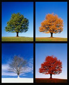 To help teach your preschooler about the differences between winter, spring, summer, and fall, try singing some of these four seasons songs for kids. Four Seasons Art, Seasons Song, Weather Seasons, Different Seasons, Seasons Of The Year, Seasons Kindergarten, Tree Study, Bright Horizons, Creative Curriculum