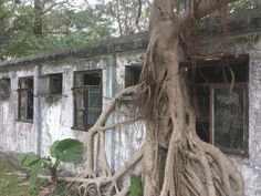 Tree Overtakes Abandoned Hostel in Hong Kong [OC] [4160x3120]