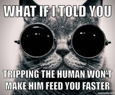 I wish my cat would learn this #meme #wish #learn #funny #humor #comedy #lol