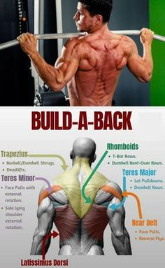 The image that comes to mind when people think of exercise tends to be cardiovascular: you picture treadmills and ellipticals, spinning or step classes, or running. However, an equally important aspect of exercise is strength training Fitness Workouts, Weight Training Workouts, Fun Workouts, Best Back Workouts, Back Workout Men, Workout Routines, Upper Back Exercises, Body Exercises, Upper Back Muscles