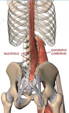 Gluteal and Psoas Relationship for Yogis - Yoga Anatomy