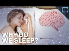 What's The Point of Sleeping? We spend 36% of our entire life asleep, but what exactly is happening to your body and brain while snoozing? By: TestTube Plus.