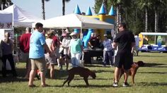 The 2014 Fall Festival and Nocatee Farmers Market
