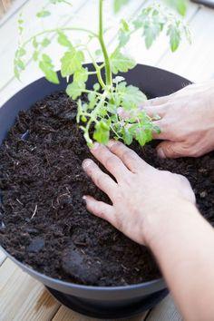 Planter Tomates En Pot : 79 meilleures images du tableau conseils jardinage gardens plants et tips ~ Nature-et-papiers.com Idées de Décoration