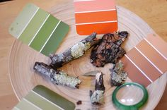 Color finding in nature with paint chart cards