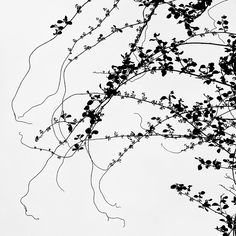 Young Vines / Paul Jett / 2014 archival pigment print; photograph / Art Size: 10 x 10; Frame Size: 17 x 17