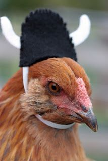 A whole page of chickens in Halloween costume hats.