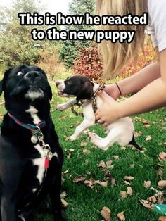 No puppy!  (Not everyone was excited about the new addition to the family!!)