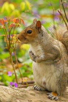 A Happy Little Guy - #Squirrel