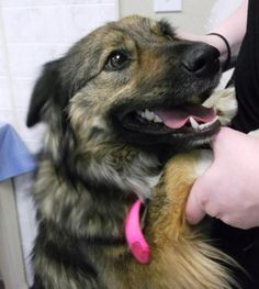 A Dog looking for her forever home, petfinder.com (look for pets were you live). ADOPTED :)