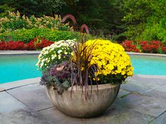 Poolside Container Planted for Fall with Autumn Joy Sedum putting on quite the display in the backdrop!