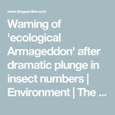 Warning of 'ecological Armageddon' after dramatic plunge in insect numbers Environment The Guardian Daily Mail News, Sustainable Farming, Sustainability, Weather Activities, Bee Friendly, Big Oil, What A Beautiful Day, Beneficial Insects