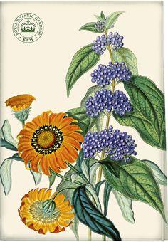 The Royal Botanic Gardens, Kew, Garden Delights Treasure Flower