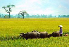 Vietnam's countryside