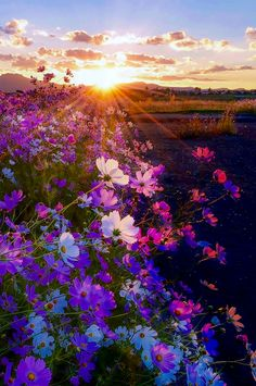 Setting sun and field of flowers by Mark van Vuuren (South Africa)