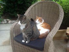 Broertje & Blubber